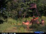 deer11_s