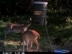 deer1_s