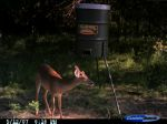 deer7_s